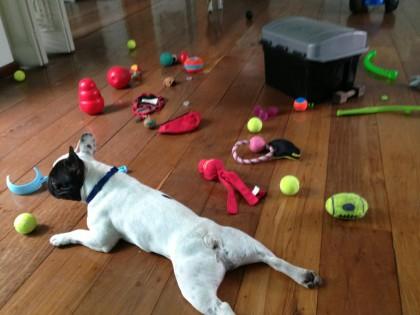 Muitos Brinquedos